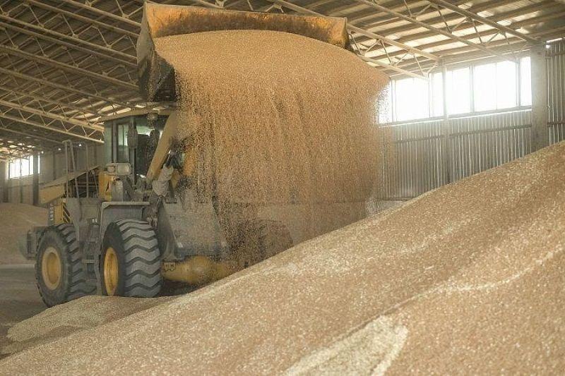 Краснодарский край собирается увеличить экспорт товаров АПК благодаря принятию закона о сельхозпродукции
