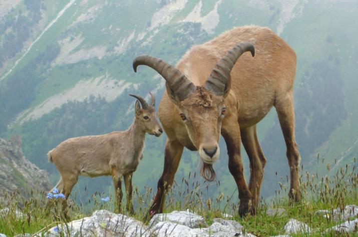 Природу Кавказа покажут посетителям исторического парка «Россия – моя история»