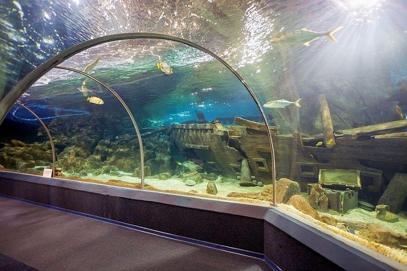 Зоопарки, дельфинарии и океанариумы Краснодарского края получат субсидии из-за простоя во время пандемии
